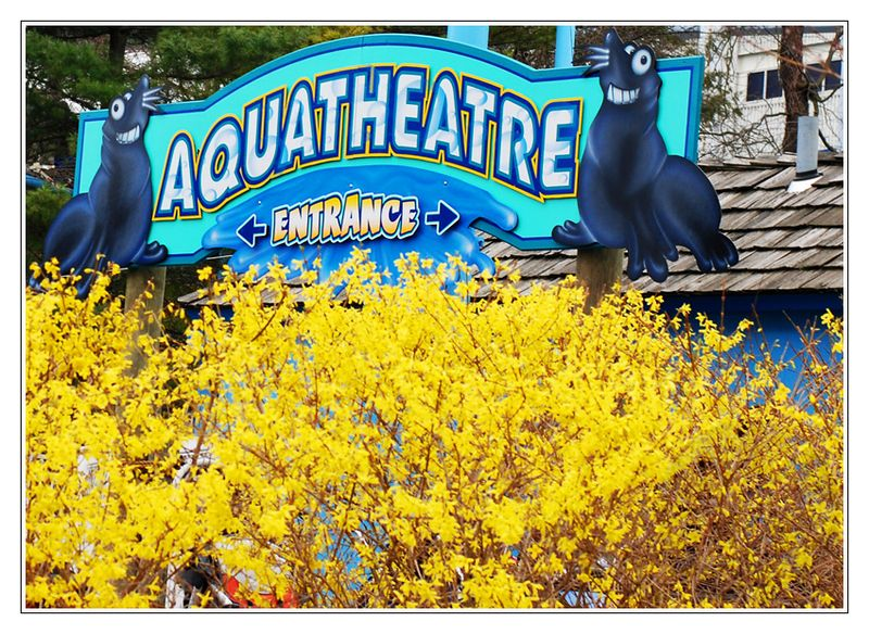 AquatheatreForsythia