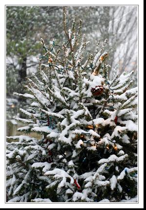 Snowychristmastreefl